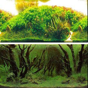 Zision Aquarium Background