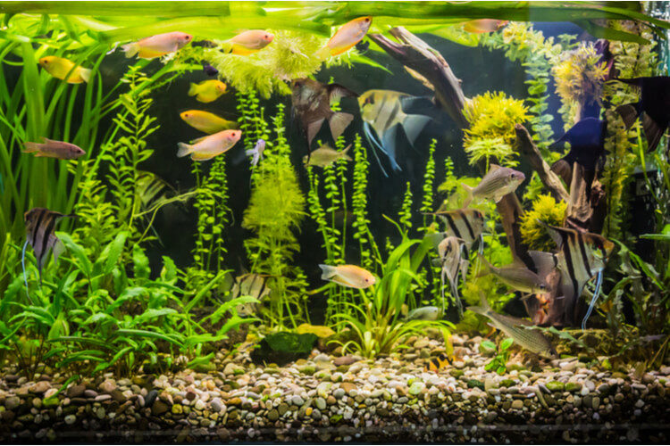The Best Aquarium (and Fish Tank) Rocks