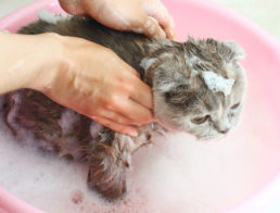 The Best Cat Shampoos