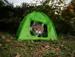 The Best Cat Tents