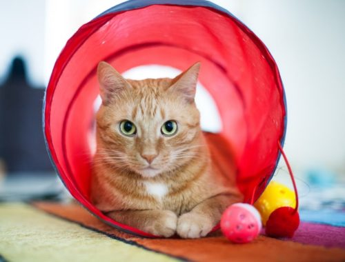The Best Cat Tunnels