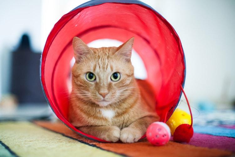Los mejores túneles para gatos
