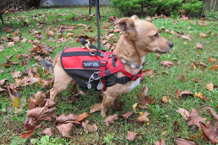 The Best Emotional Support Dog Vests