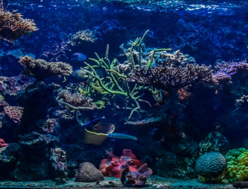 The Best Fish Tank (and Aquarium) Backgrounds