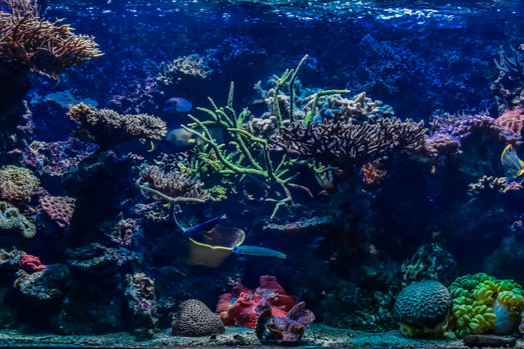 The 25 Best Fish Tank Backgrounds Of 2020 Pet Life Today