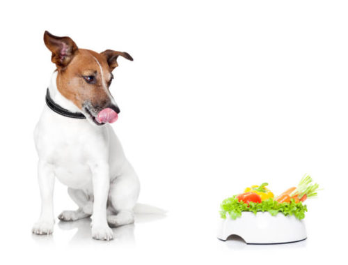 The Best High Fiber Dog Food