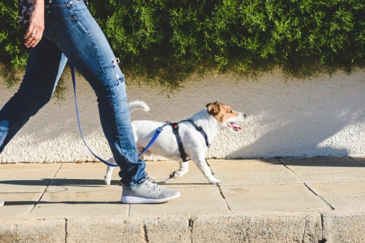 How to Properly Loose Leash Walk Your Dog