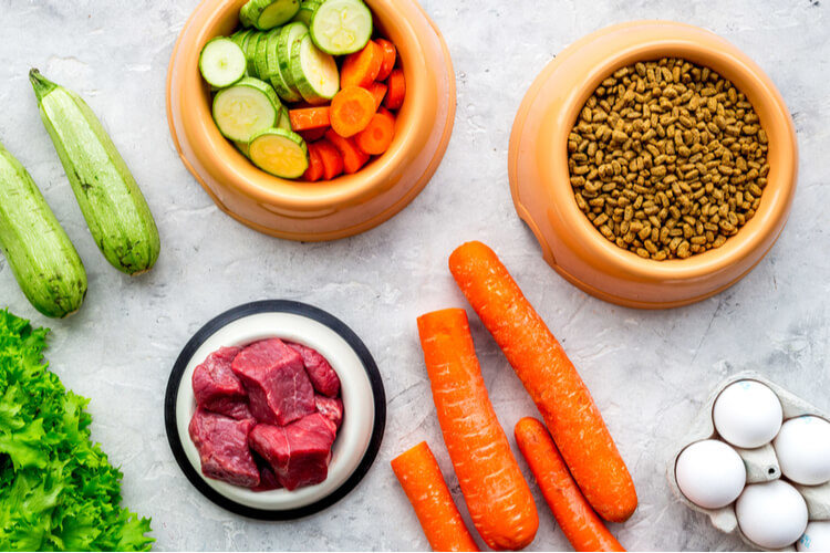 The Best Low Fat Dog Foods