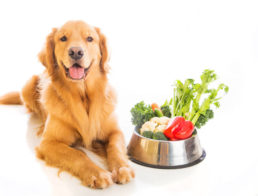 The Best Low Protein Dog Foods