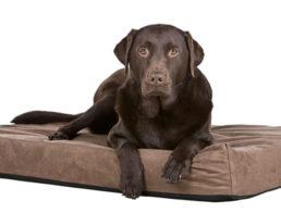 The Best Memory Foam Dog Beds