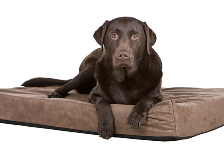 The Best Memory Foam Dog Beds