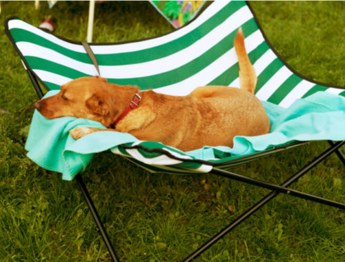 The Best Outdoor Dog Beds