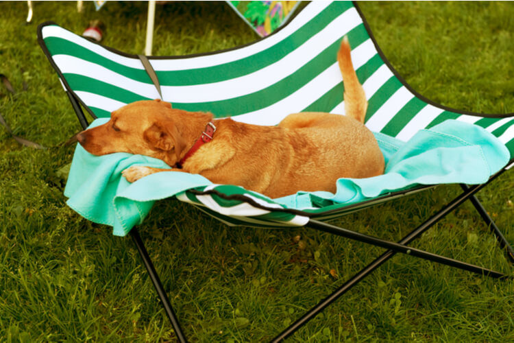 The 25 Best Outdoor Dog Beds Of 2020