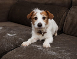 The Best Pet Hair Removers