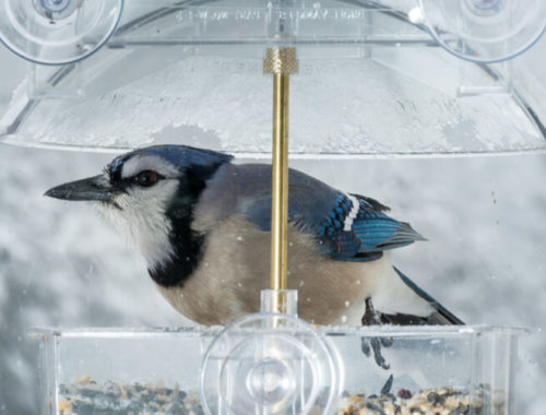 The Best Window Bird Feeders