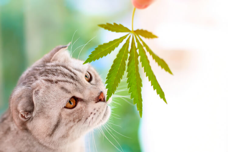 The Best CBD Oil for Cats