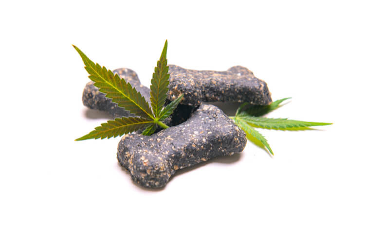 The Best CBD for Pets