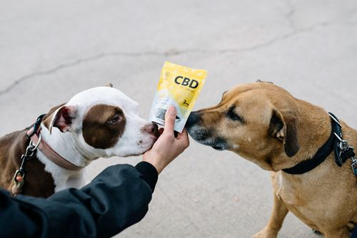 Two dogs sniffing a pack of CBD dog treats