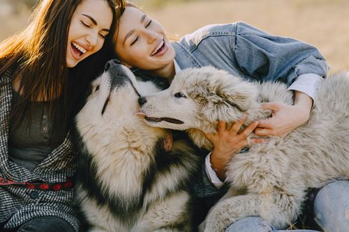 Two women laughing and cuddling their husky dogs