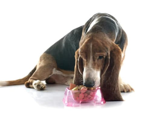 The Best Senior Dog Foods