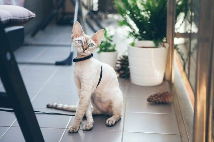 The Best Cat Leashes