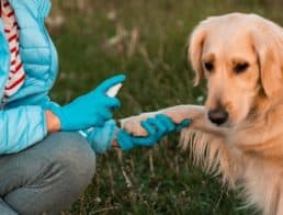 The Best Chlorhexidine Products for Dogs