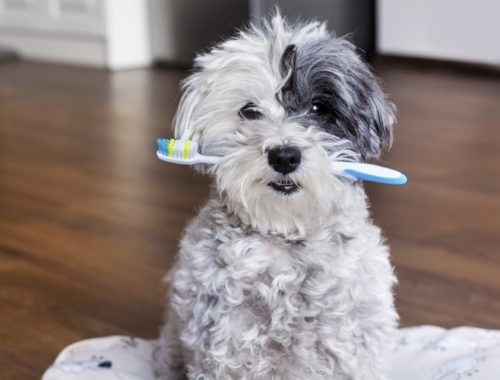 The Best Dog Toothbrushes