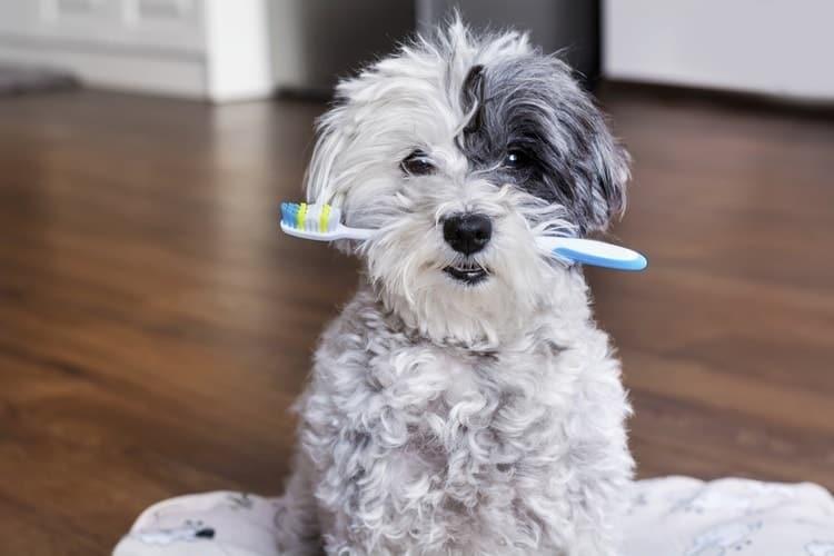 Los mejores cepillos de dientes para perros