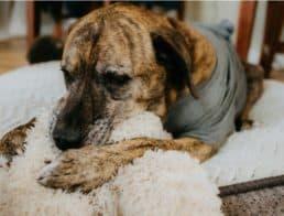 The Best Indestructible Dog Beds