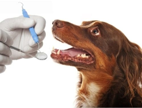 Pet Dental Insurance: The 5 Best Plans for Dogs and Cats