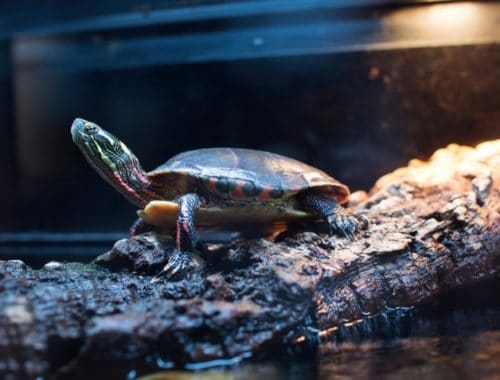 The Best Turtle Tanks