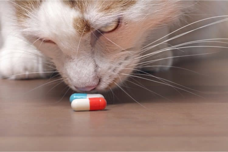 Cat and PIlls