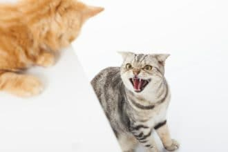 Why Are My Cats Fighting All of a Sudden? And How Do I Stop Cat Fights?