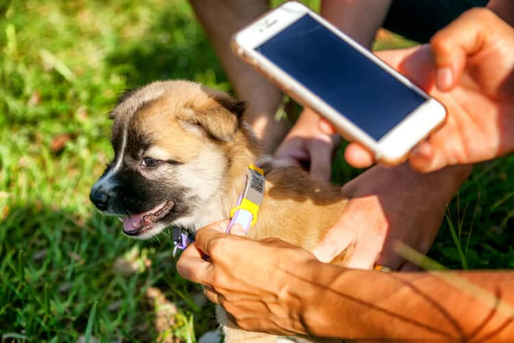 The Best Smart Dog Collars