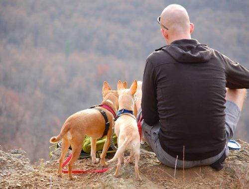 Person with two dogs