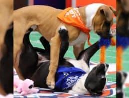 Puppy Bowl Puppies