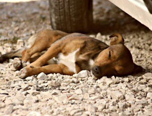 Stray Dog in Mexico