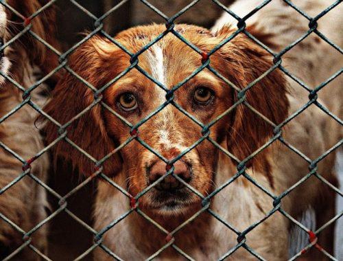 Abandoned dog in shelter