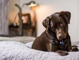 Can You Get COVID From Your Pets? It's Possible, But Unlikely, Experts Say
