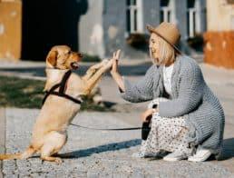 dog and woman high five