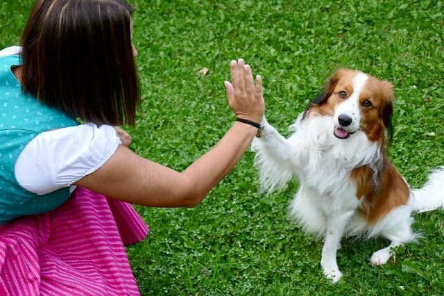 Dog giving his owner a high five as part of their tricks training