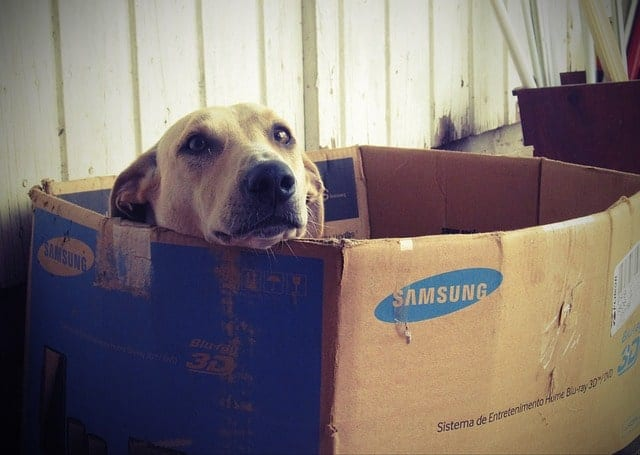 Dog inside a moving box