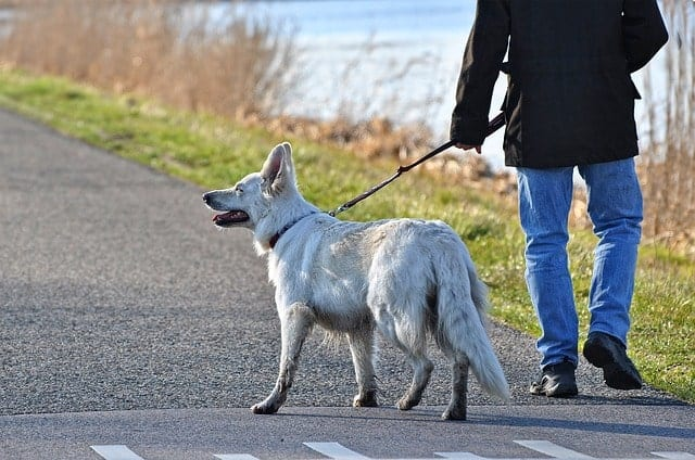 Dog on a walk outdoors with its owner