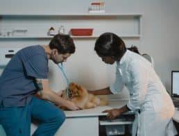 veterinary office