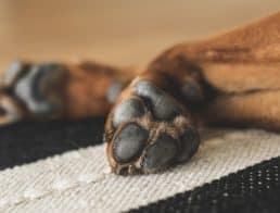 A dog's paw pads