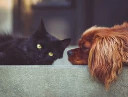 Dog and cat relaxing on furniture