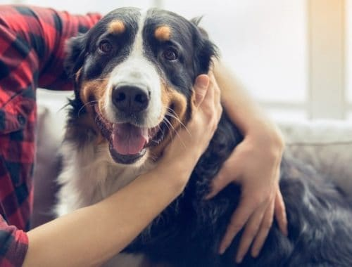 Happy dog being pet by owner