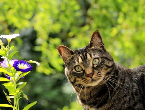 Cat enjoying safe time outdoors