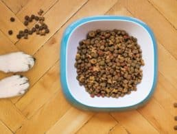 paws and kibble