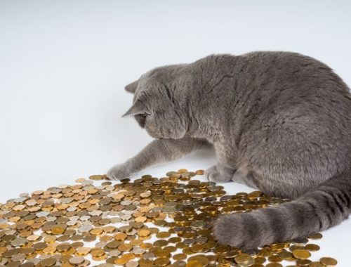 Cat playing with coins